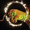 Цирки в Кормиловке
