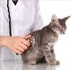 Ветеринарные клиники в Кормиловке
